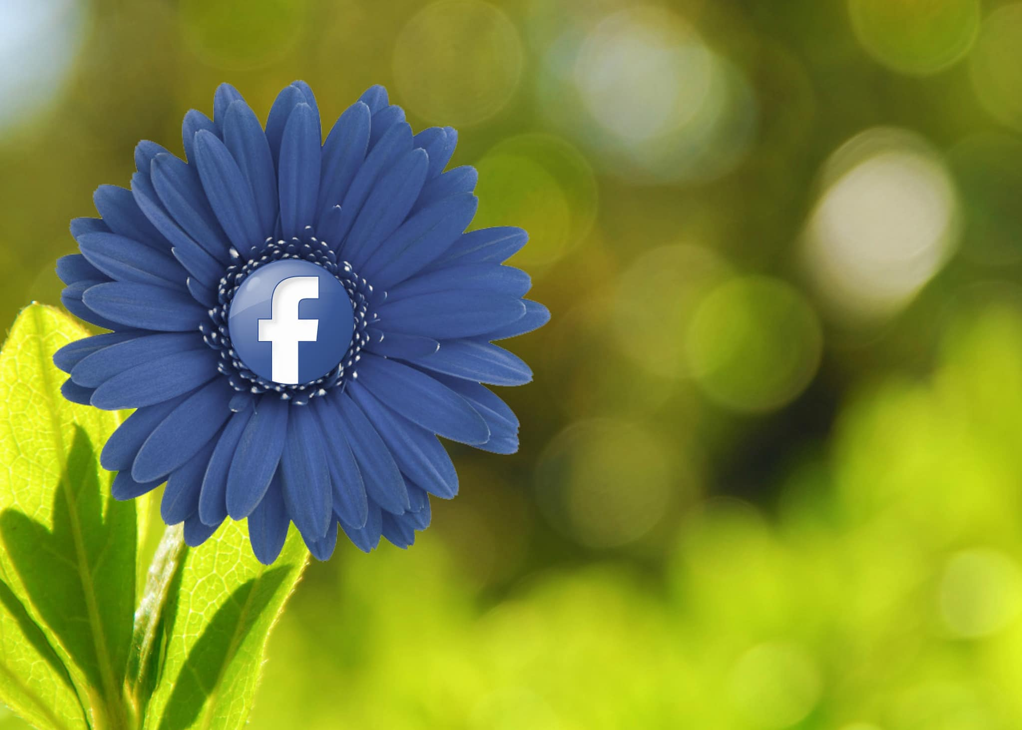 15 Tips for beefing up your security and privacy on Facebook